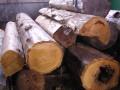 桶製造 椹原木